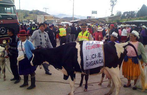 La crisis agropecuaria y lechera en Ecuador