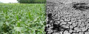 agroindustria-suelo-pobre