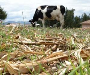 CONAIE pide a Ministerio de Agricultura se declare en ESTADO DE EMERGENCIA a sector agrícola de la Sierra